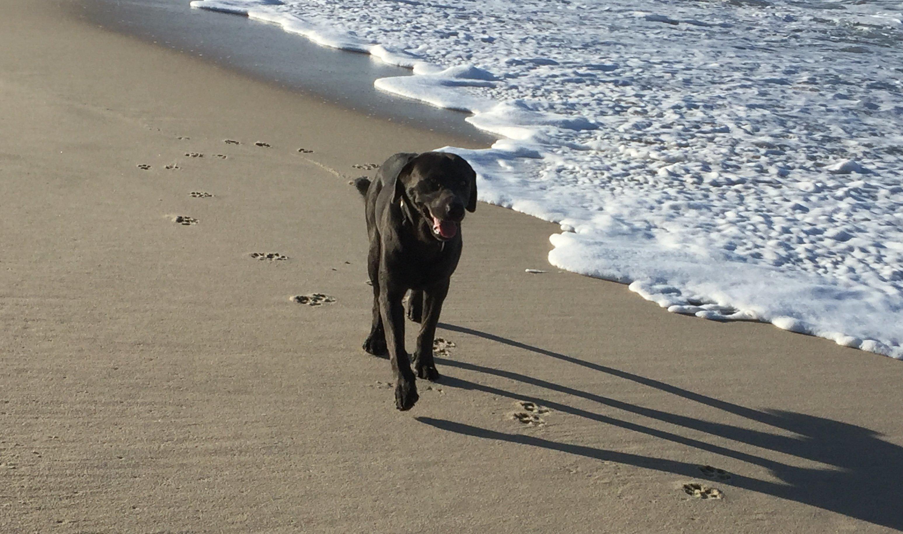 Norddeich Hundestrand
